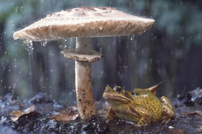 Первое попавшееся укрытие от сильного дождя.