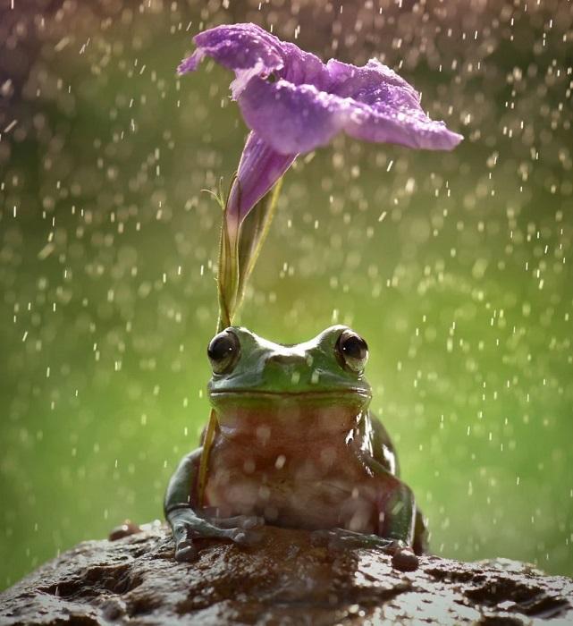Лягушка и ее травянистый зонт.