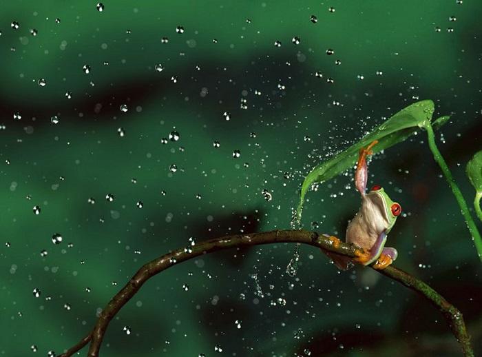 Собственный способ борьбы с дождем.