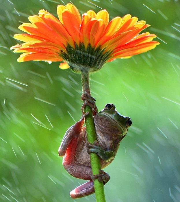 Сезонное укрытие от дождя.