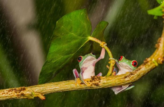 Свой способ укрыться от дождя.