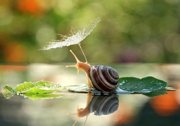 Семя одуванчика отлично подошло в виде зонтика для маленькой улиточки.