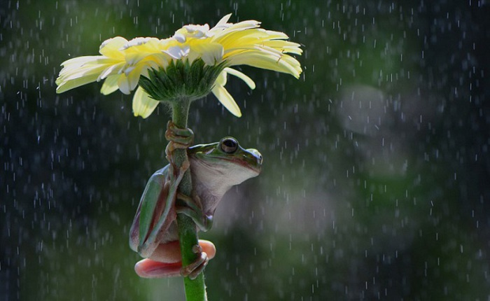 Спонтанное укрытие от дождя.