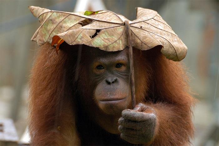 Зонтик обитателя дикой природы.