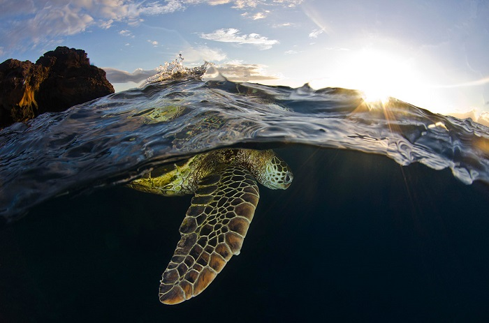 Фотограф Кристофер Доэрти (Christopher Doherty), Флорида.