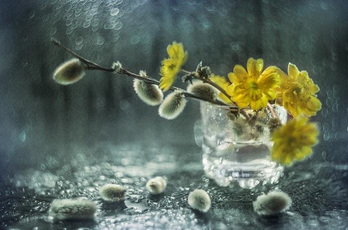 Весенняя композиция. Автор фотографии: Екатерина Науменко.