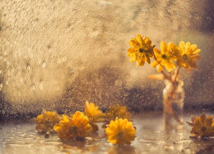 Солнечная атмосфера. Автор фотографии: Екатерина Науменко.