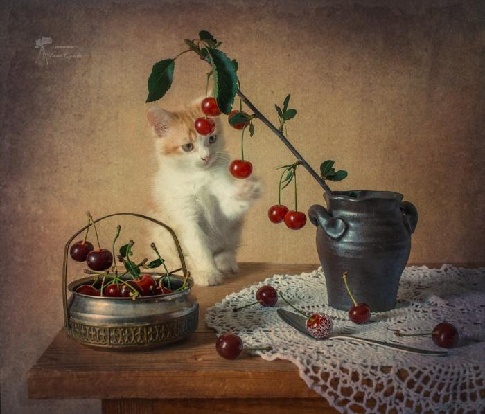 Интерес котёнка к окружающему миру. Автор фотографии: Инна Сухова.