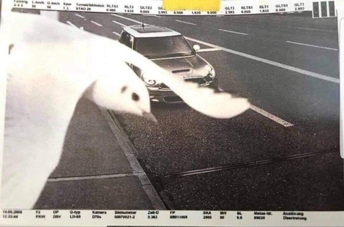 Водителю штраф не грозит - птица летит на помощь.