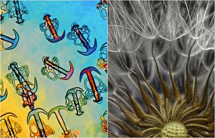Удивительные снимки таинственного мира микроскопических бактерий и клеток.