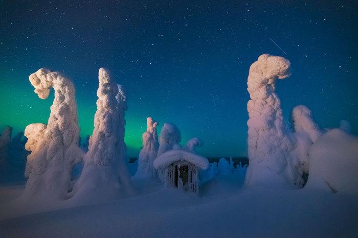 Огромные деревья, покрытые льдом и снегом.