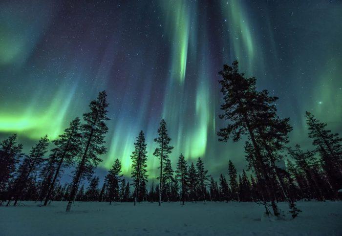 Красивое полярное сияние над хвойным лесом.