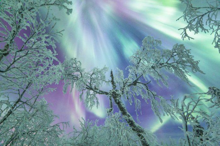 Разноцветные блики сияния опускают свои лучи над заснеженными деревьями.