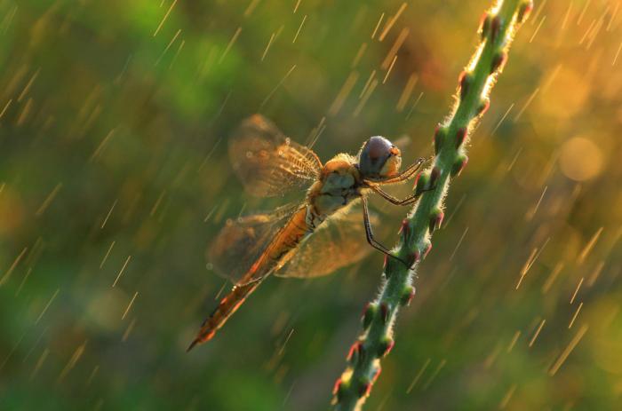 Автор фотографии: Voranat Rajchatan.