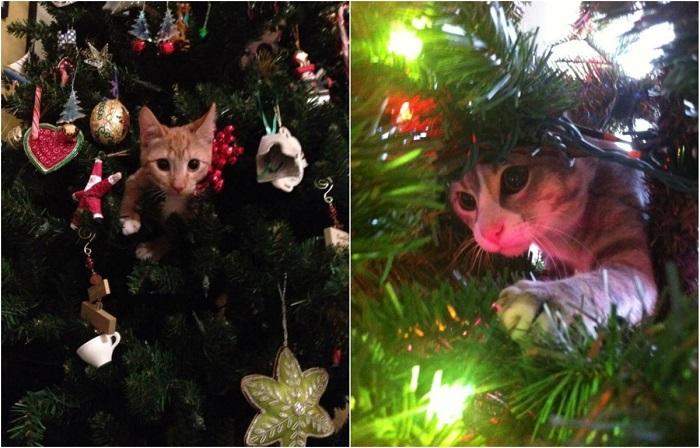 Что за Новый год без ёлки и кота!
