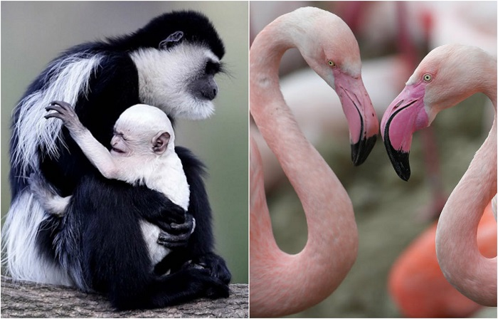 Очаровательные фотографии животных сделанные в зоопарках Германии, Бельгии и Чехии.