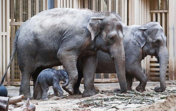 В семействе слонов из зоопарка Планкендаль это уже 10 малыш.