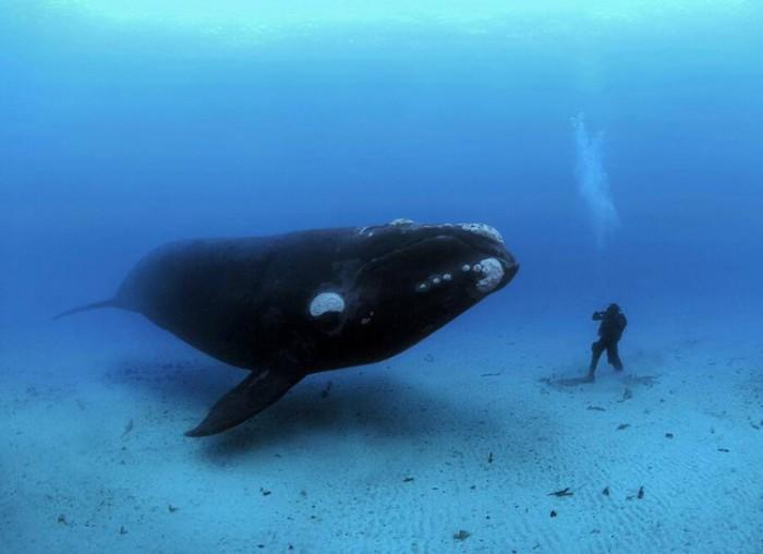 Встреча морского животного и человека.