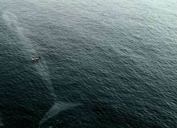Один взмах хвоста и лодка взлетит в небо.