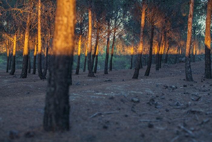 Горизонтальна смуга відокремлює світле від темного.
