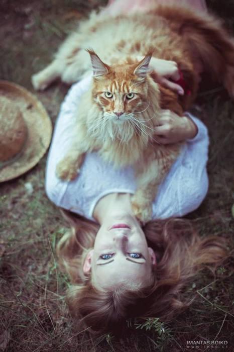 Норвежский лесной кот.   Фото: ofpof.com