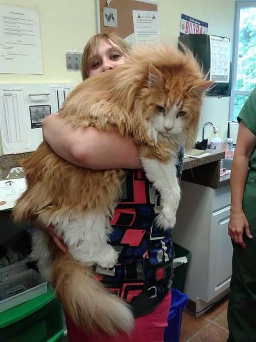 Испуганный кот прижался к своей хозяйке.   Фото: vk.com