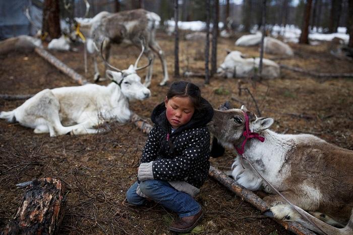 С самого раннего возраста детей приучают заботиться об оленях.