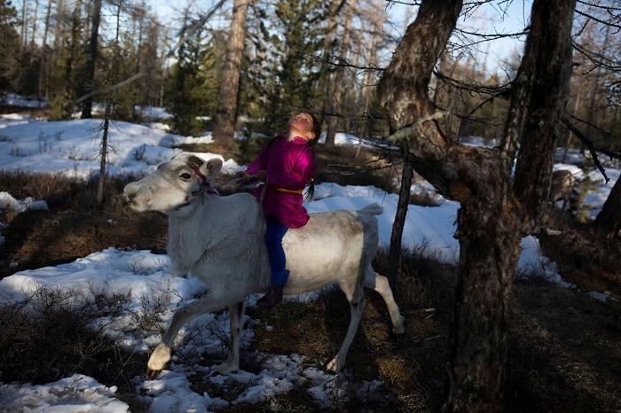 Девочка катается на северном олене.