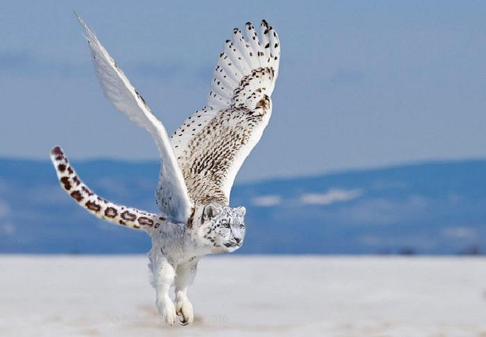 Снежный тигроорел.