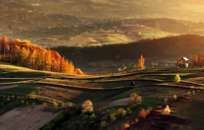 Золотисто - зеленые холмы переливаются солнечным светом.