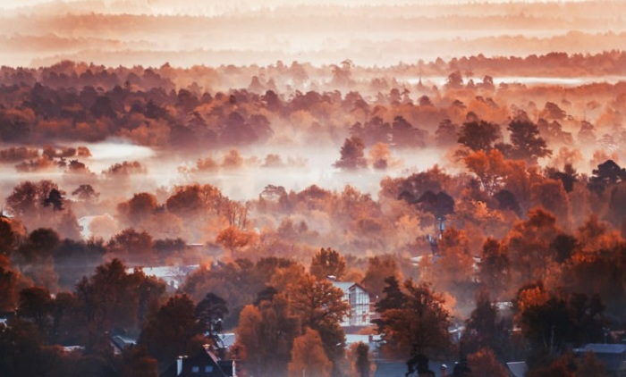 Густые туманы подмосковной осени.