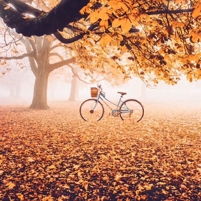 Осенний королевский парк по утрам погружен в таинственный туман.