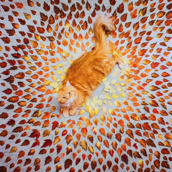 Кошка Котлета и осеннее вдохновение.