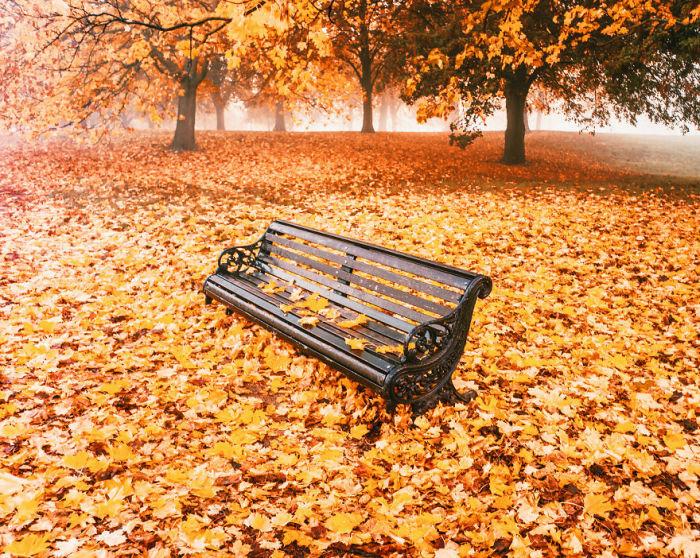 Мемориальная скамейка среди опавшей листвы в Гайд-парке.