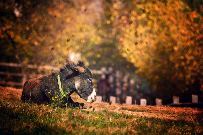 Маленький ослик, отдыхающий на зеленой лужайке.