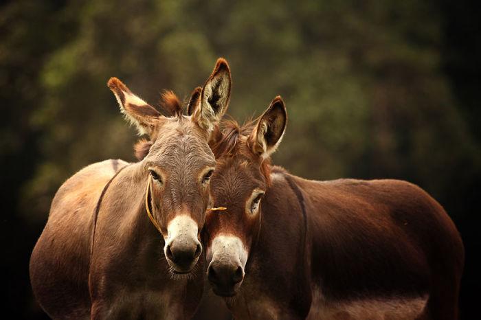 Иногда Рахель делает уникальные снимки осликов, показывая миру их добрую красоту.