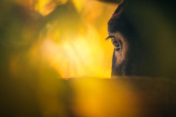 Трогательный кадр запечатленный фотографом на закате солнца.