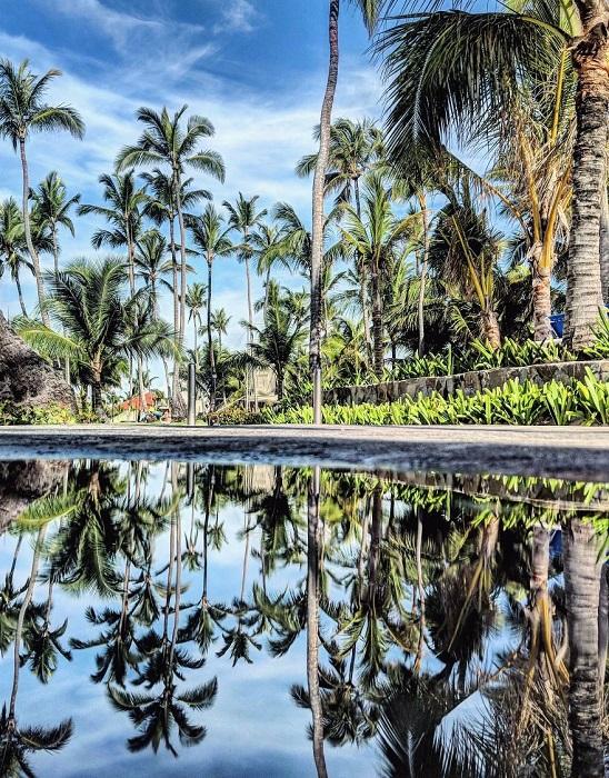 Стройные пальмы, отраженные в луже в Пунта-Кана (Доминиканская республика).