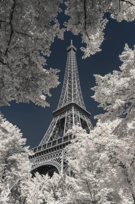 Фотография Эйфелевой башни в окружении  тысячи листьев.