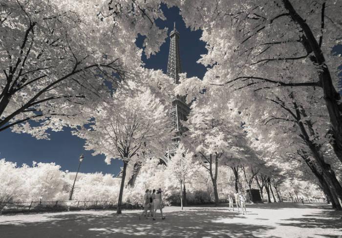 Широкая аллея, по краям которой стоят сказочные деревья, с протянутыми в небо ветвями.