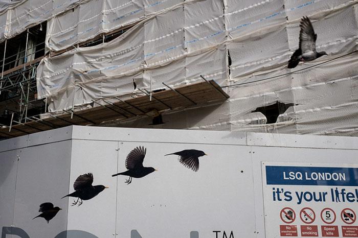 Продолжение полета птиц.