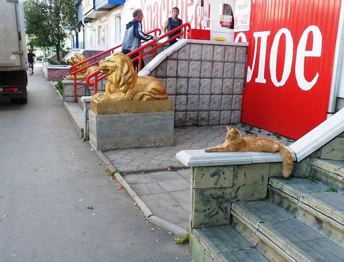 Величественный кот, чувствующий себя тигром.