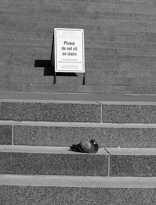 Просьба к голубю не относится, он читать не умеет.