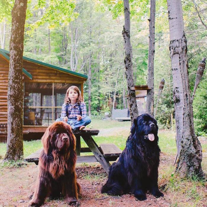 5-летний мальчик и огромные лохматые псы.