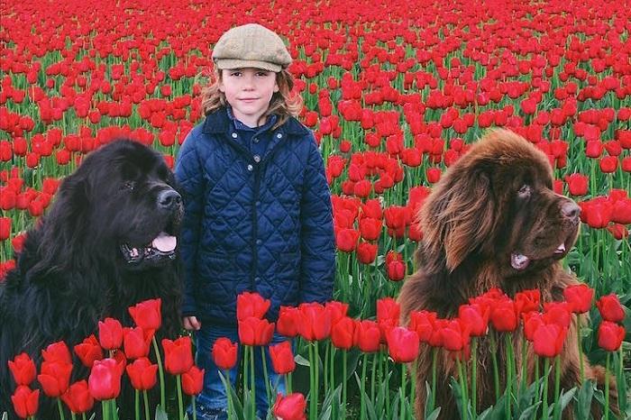 Джулиан с двумя гигантскими собаками породы Ньюфаундленд.