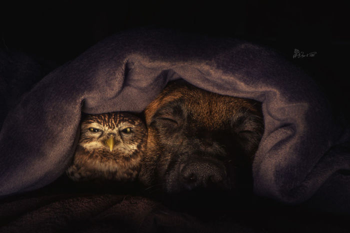 Ты поспи, друг, а я постерегу твой сон.