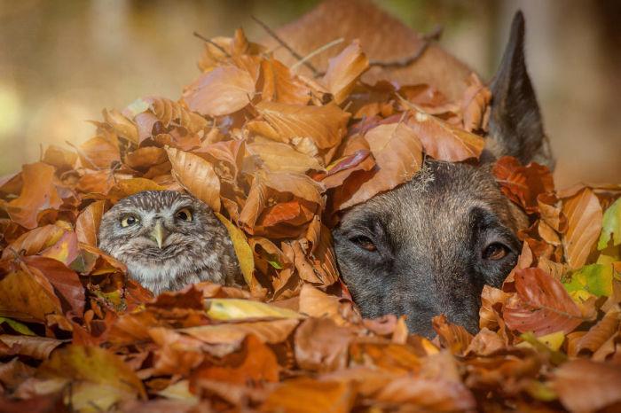 Игры осенью с опавшими листьями очень увлекательное и забавное занятие.