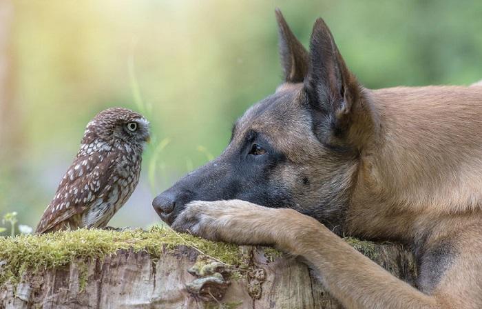 Невероятная дружба в кадре немецкого фотографа Таней Брандт.