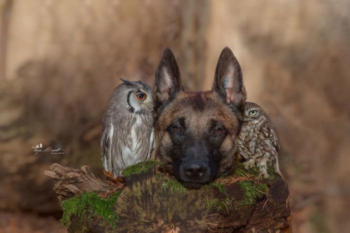 Такой невероятной дружбе можно только поучиться или даже позавидовать.
