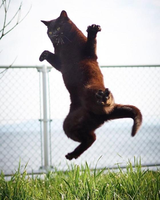 … выпускай когти, словно тигр бросается на добычу!